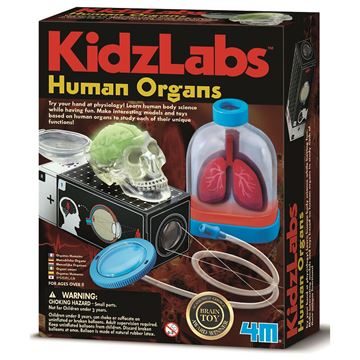 Picture of 4M Science - Human Organs