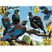 Picture of Holdson Puzzle - Set of Four Treasures of Aotearoa S1, 96pc Frame Tray Series